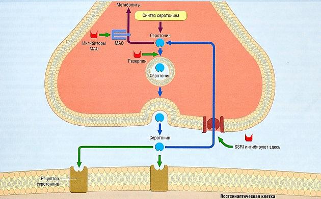 Селективные ингибиторы обратного захвата серотонина