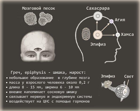 Мозговой песок