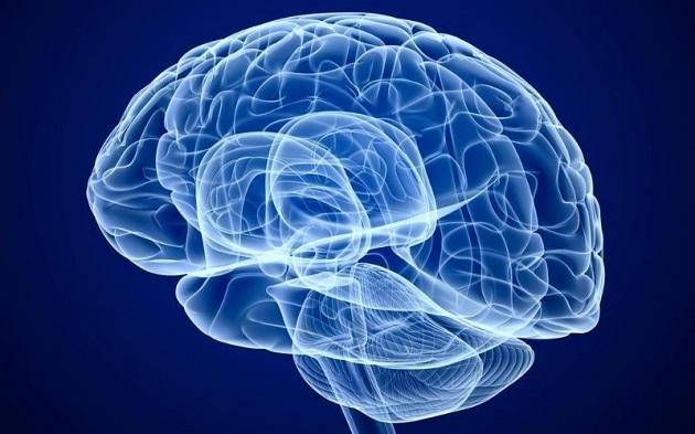 Внешний вид мозга